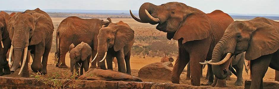elephants at water point.jpg